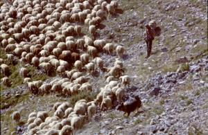 1991, Marcel Bellieud à la Colle de Marre (Péone)