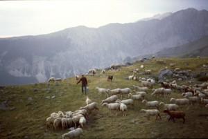 1991, Marcel Bellieud arrive aux assalès de l'Estrop (Péone)