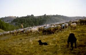 1992, Léon Rancurel aux assalès de Pra Bataglié (Beuil)