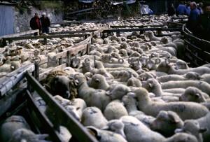 Guillaumes foire aux tardons, 1993
