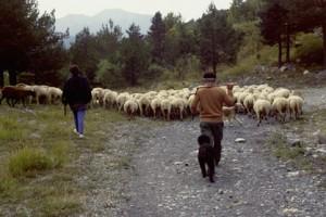 transhumance berger pastoralisme Péone la Baumette