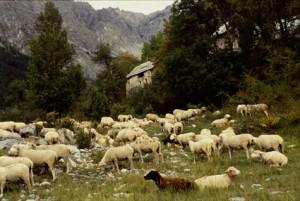 transhumance berger pastoralisme Péone