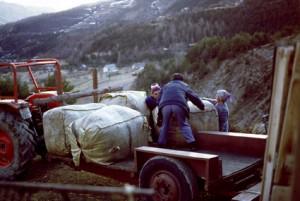 1995, Marcel Bellieud, Lina Bellieud & Marie-Louise Gourdon aux Mians (Péone) chargeant les bouras de laine