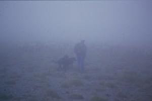 1997, Marcel Bellieud et son troupeau dans le brouillard, sur les Arpès, Estrop (Péone)