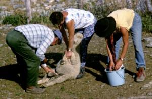 1998, Marcel et Lina Bellieud, Anne Bachet au parc de la cabane du Croui, Estrop (Péone)