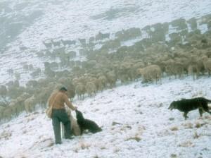 2003, les premières neiges sont tombées sur les alpages de l'Estrop, il faut songer à redescendre