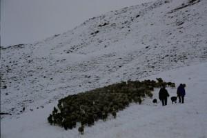 2003, les chiens sont bien utiles pour faire bouger le troupeau figé par la neige
