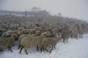 2003, au parc de la cabane du Croui sous la neige et le brouillard