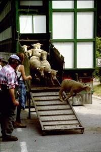 2005, arrivée de Franca André à Péone