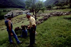 2006, à la Serre entre le col du Buis et le col de Féline, chez Lucien Grac
