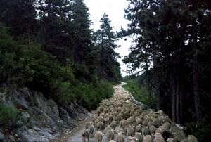 2006, la montée du col du Buis après Briançonnet, en direction du col de Féline et d'Entrevaux