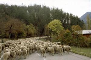 2007, sur la route de Villeneuve d'Entraunes