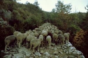 2007, dans le col de Féline, sur la carraire