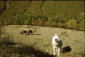 2007, la halte à la Vénière