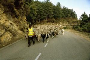 2007, sur la route entre Briançonnet et la Clue de St-Auban