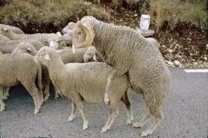 2007, sur la route de Canaux, la lutte en cours de route
