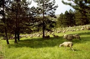 2008, garde à Caussols dans les sous-bois