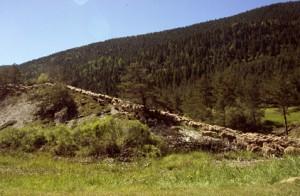 2008, la descente de la carraire du col de Bleine vers la route de St-Auban