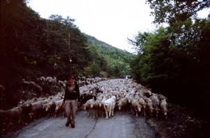 2008, la descente du col du Buis vers la Serre et le col de Féline