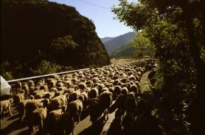 2008, sur la route vers les gorges de Daluis