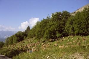 2008, le troupeau est parqué à Estenc avant de rejoindre le quartier de juillet