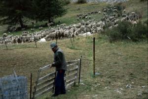 2008, André Franca démonte le parc d'Estenc avant le départ du troupeau