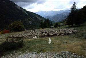 2008, le troupeau dans le parc d'Estenc