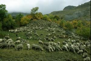 2008, sur la route d'Estenc vers St-Sauveur