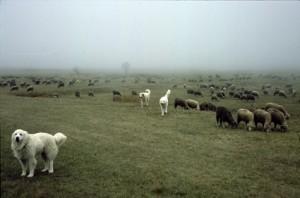 2008, dans le brouillard sur la plateau de Caussols