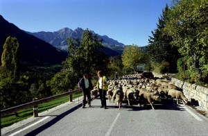 2009, sur la route de Villeneuve d'Entraunes