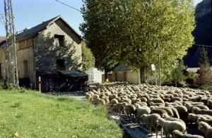2009, l'arrivée à Villeneuve d'Entraunes