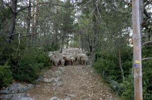 2009, dans la carraire du col de Féline au-dessus d'Entrevaux