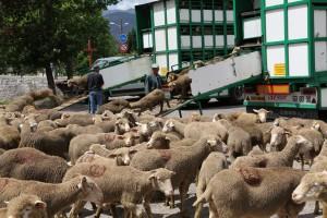 les bétaillères sont déchargées en même temps, 2010