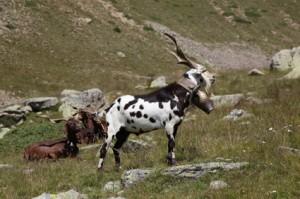 2011, sur la montagne de Claï