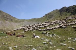 2011, le troupeau sur la montagne de Claï