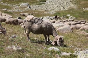 2011, sur la montagne de Claï, un des floucats de Jean-Paul Loquès