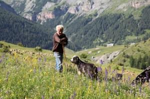 2011, Prosper Bressi gardant ses brebis au Castellar