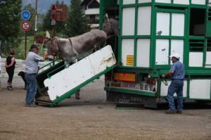 2011, arrivée au Bourguet. Le débarquement des ânes