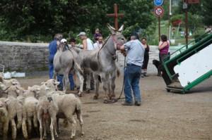 2011, arrivée au Bourguet. Les ânes sont déchargés