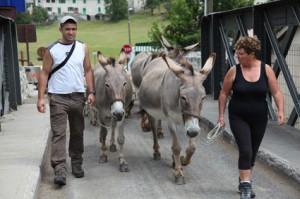 2011, le départ est donné. Première étape le parc du Bourguet, le temps que les bergers cassent la croûte
