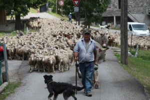 2011, le départ est donné, Francis Loquès prend la tête du troupeau