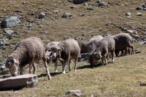 2012, aux assalès de l'Alpe