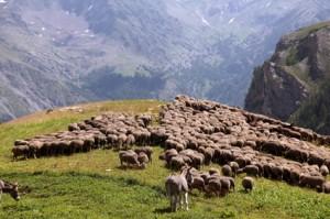 2013, à l'Alpe de Bousiéyas
