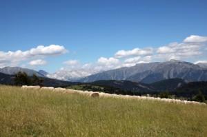 2013, le troupeau de Jean-Pierre Thimoléon à Ars