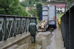 2014, arrivée au Bourguet et déchargement des camions sous la pluie