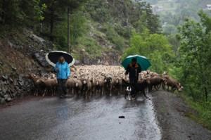 2014, la montée de la route vers Roya se fait aussi sous la pluie