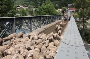 2014, les dernières bêtes s'étirent sur le pont