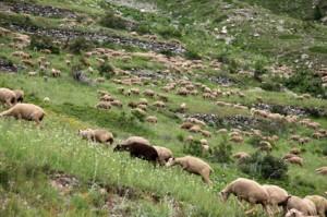 2014, le troupeau commence à s'étaler sur les pentes