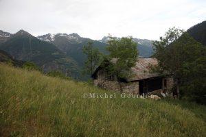 2015 pâturage de Chabanalons IMG_1561