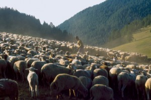 berger pastoralisme élevage transhumance